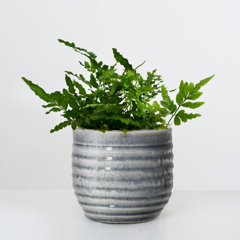 Crackle glazed Stoneware plant pot