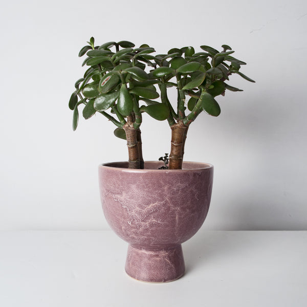 Glazed Stoneware plant pot (Low stock)