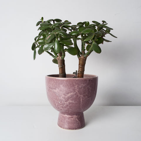 Glazed Stoneware plant pot (Last 2 in stock)