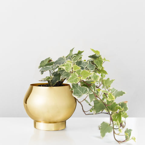 Gold metal plant pot