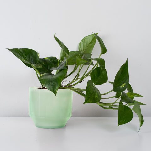 Green glass plant pot