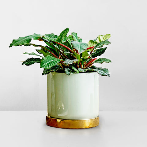 Mint Stoneware plant pot with gold tray
