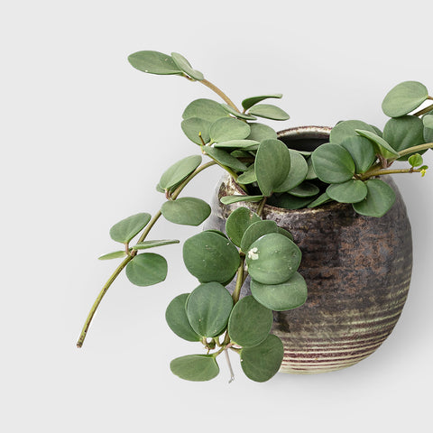 Earth glazed stoneware wall plant pot
