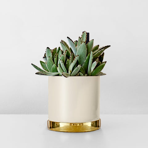 Stoneware plant pot with gold tray