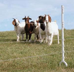 how to keep goats from jumping fence