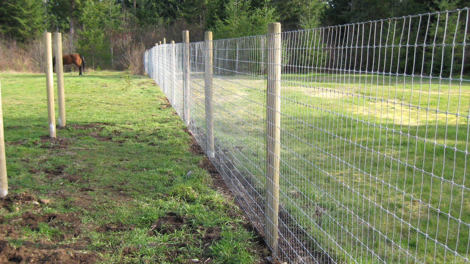 No Climb Fencing Features A Strong Wire That Is Woven In A Grid The Grid Has Small Openings That Prevent A Horses Hoof From Becoming Caught