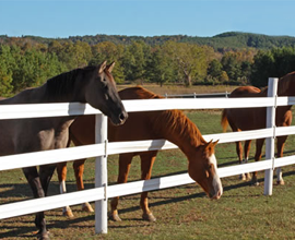 Horse Fence Design Horse fencing 11 options what to consider when buying horse fencing this unique design provides the fence with durability strength and a flexible finish to keep your horses workwithnaturefo