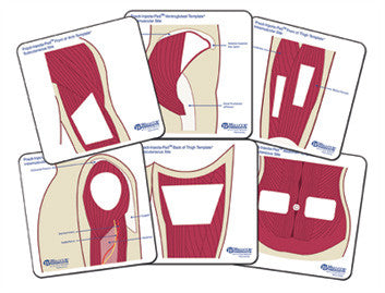 Practi-Student Anatomical Templates™ (Color)