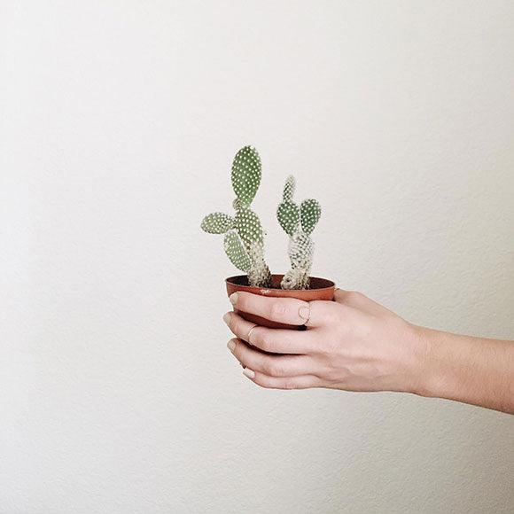 stacking 101 with the moptop | rings with cactus |  Fresh Tangerine blog