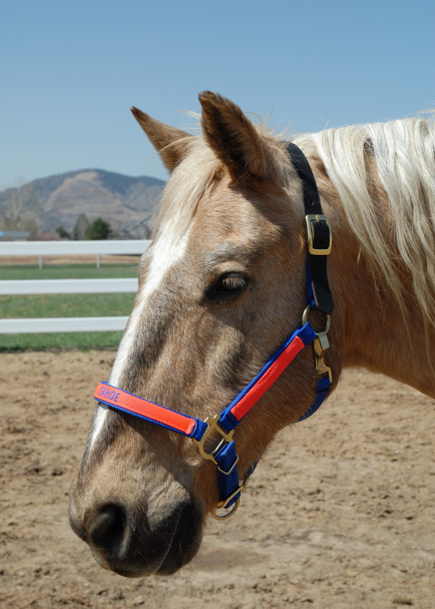 Arabian Horse Halters Thriving Pets International