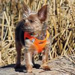American River Solid Choke Free Dog Harnesses