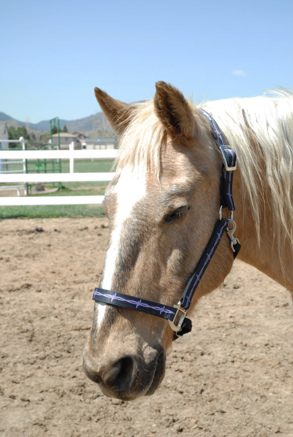 Designer Horse Halters Starting at $40.00