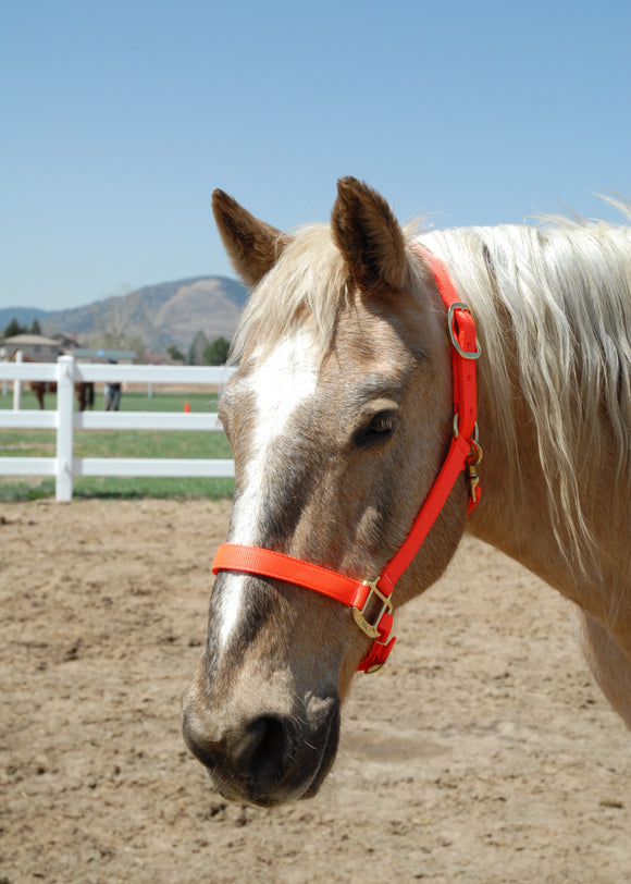 Nylon Adjustable Horse Halters for Average, Large and Draft Horses Starting at $40.00