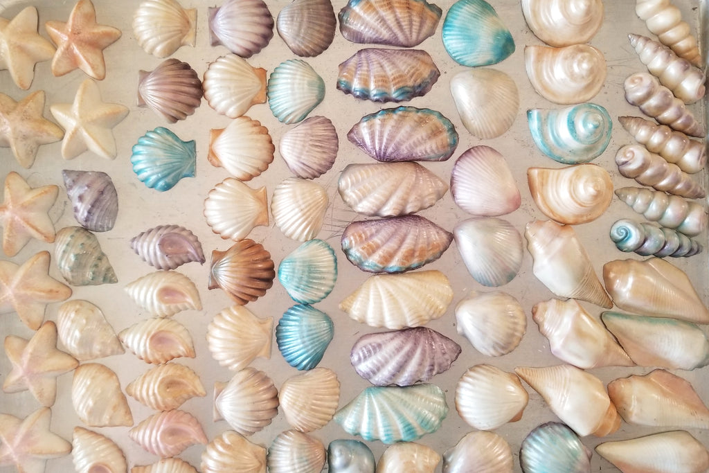 Shimmering Chocolate Seashells by Chef Mitchie