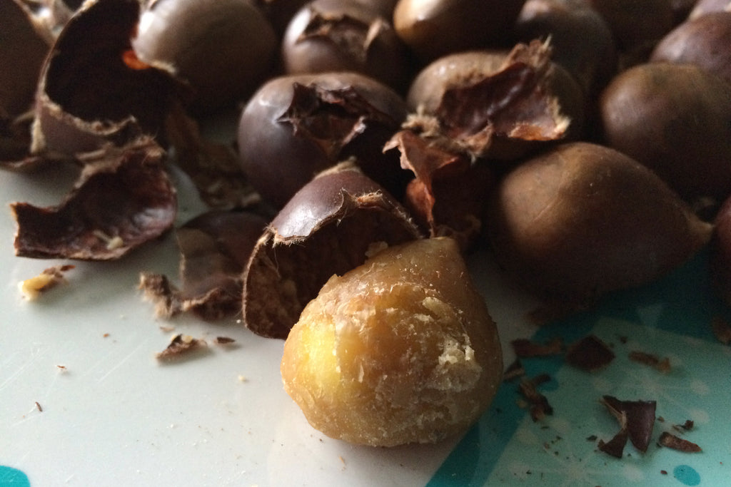 Chestnuts are softer and moister than most other nuts
