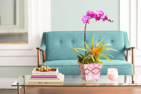 Best Indoor Plants for Bathrooms: Orchids
