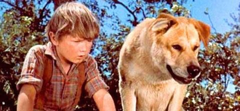 15 Famous Dog & Human Duos in Pop Culture: Old Yeller