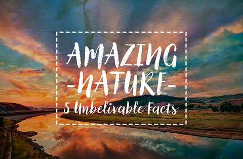 Amazing Nature: 5 Unbelievable facts
