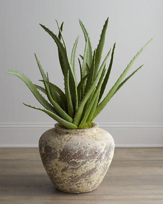 Best Indoor Plants for Bathrooms: Aloe Vera