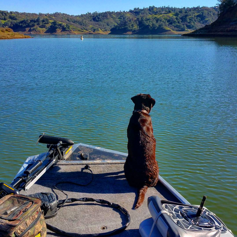 wildlife watching at lake berryessa