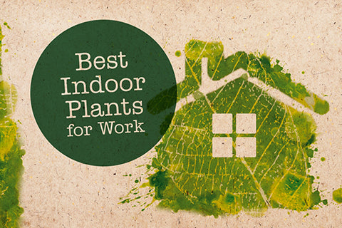 12 indoor plants great for work
