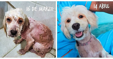 Puppy Transformations: Heartwarming Photos of Dogs Before and After the Shelter
