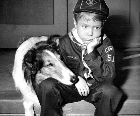 15 Famous Dog & Human Duos in Pop Culture: Lassie and Timmy