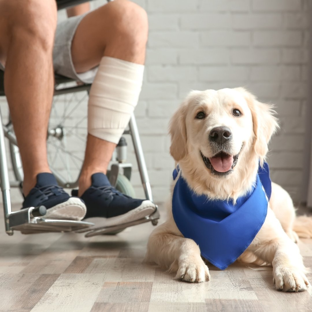 5 Benefits Of Service Dogs For Those With Chronic Illness | Care+Wear