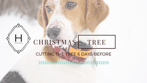 cutting and decorating the christmas tree with melvin the beagle dog