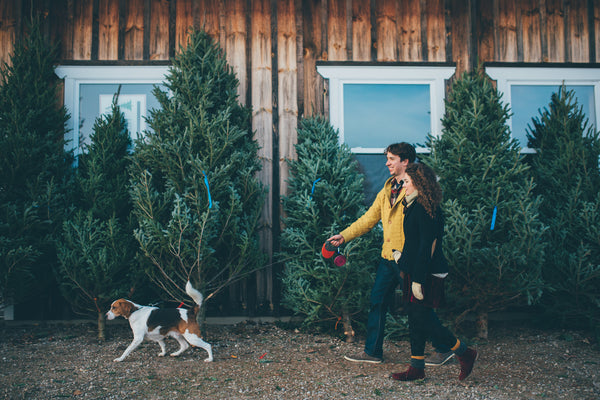 cutting down a christmas tree in canada hattitude jewels 20 things to do this holiday season