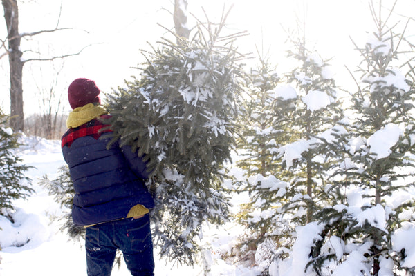 tristan carrying the christmas tree from hockley valley tree farm