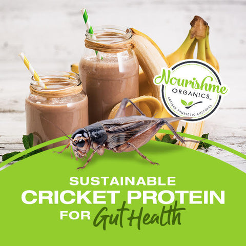 cricket protein and gut health