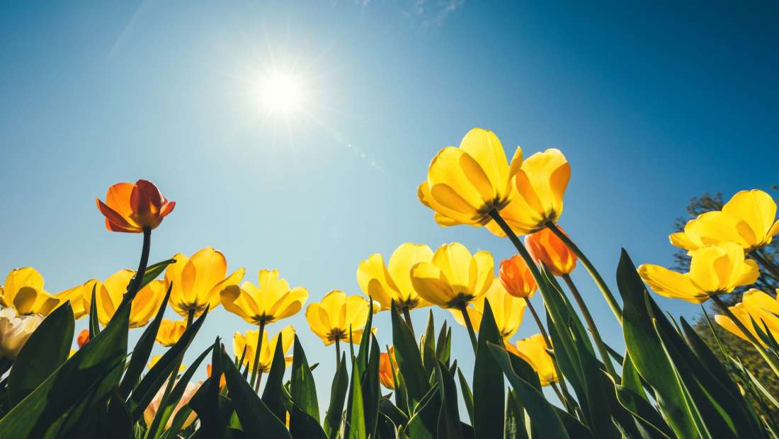 4 Tips To Prepare for Spring