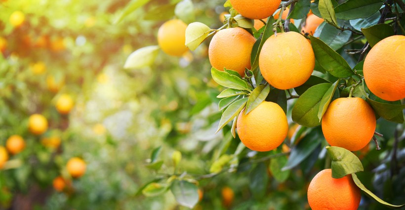 Ingredient Spotlight: Organic Sweet Orange Essential Oil