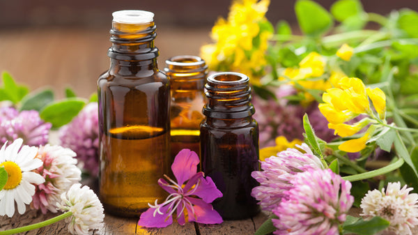 What Parts of Plants are Essential Oils Derived from?