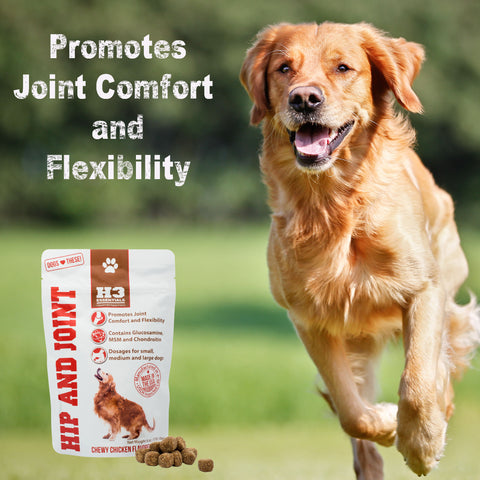 H3 Essentials Glucosamine for Dogs - Hip and Joint Supplement for Dogs with Glucosamine, Chondroitin and MSM - 6oz