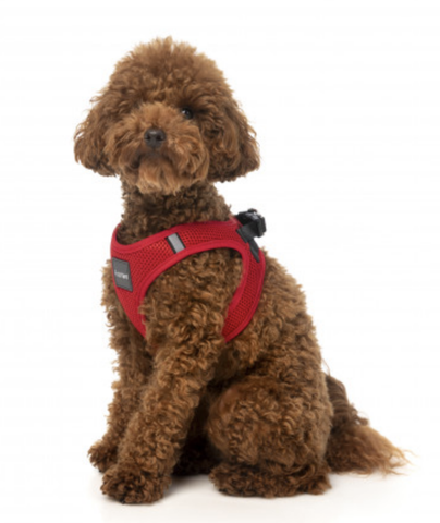 Fuzzyard Step In Harness Rebel Red