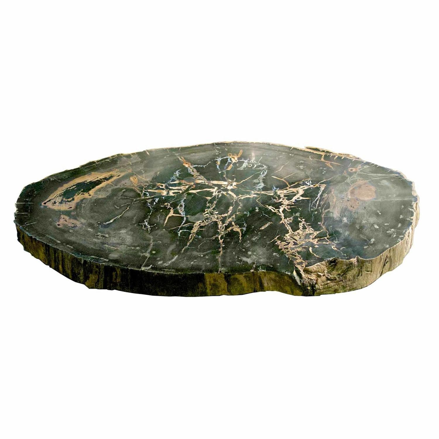 Large Petrified Wood Slab Coffee Table PF-1042 by AIRE Furniture