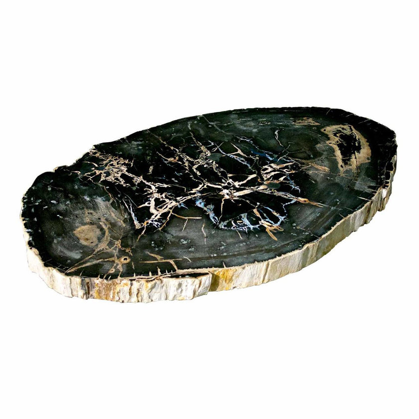 Large Petrified Wood Slab Coffee Table PF-1043 by AIRE Furniture