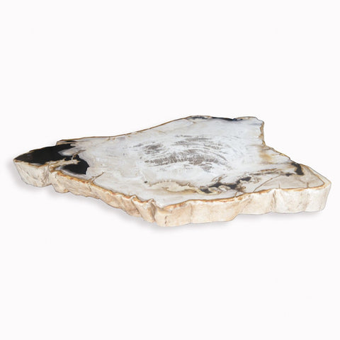 Copy of PF-1104 Petrified Wood Slab With Custom Made Base by AIRE Furniture