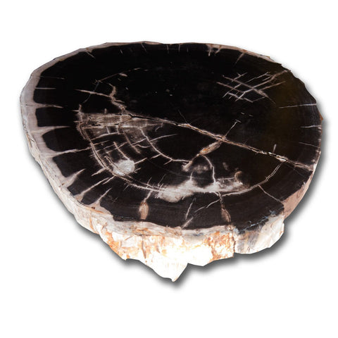 PF-1105 Petrified Wood Slab With Custom Made Base by AIRE Furniture