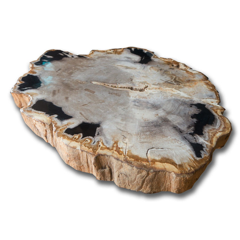 PF-1107 Petrified Wood Slab With Custom Made Base by AIRE Furniture