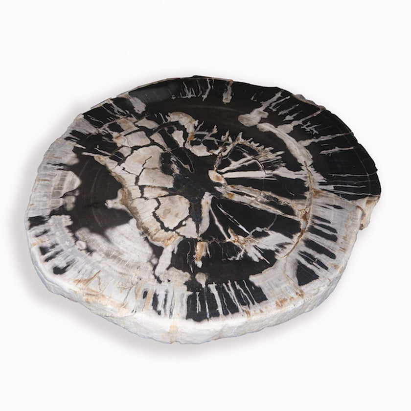 PF-1109 Petrified Wood Slab With Custom Made Base by AIRE Furniture