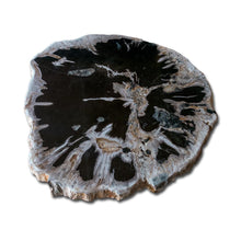 Petrified Wood Slab With Custom Made Base PF-1115 by Aire Furniture