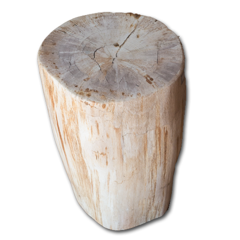Petrified Wood Log Stool PF-2096