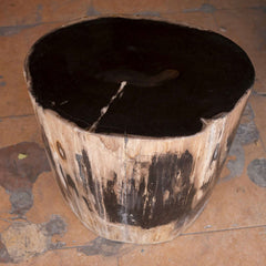 Petrified Wood Accent Stool- Rare Ivory Ring/Black Core Side Table by Aire