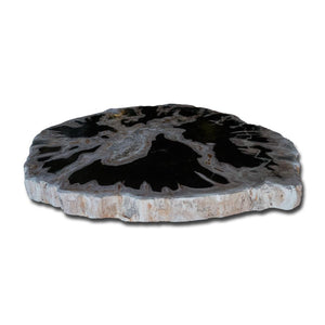 Petrified Wood Slab With Custom Made Base PF-1116 by Aire Furniture