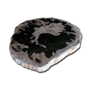 Petrified Wood Slab With Custom Made Base PF-1118 by Aire Furniture