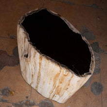Petrified Wood Accent Stool- Cream/Black Core Rare Side Table by Aire