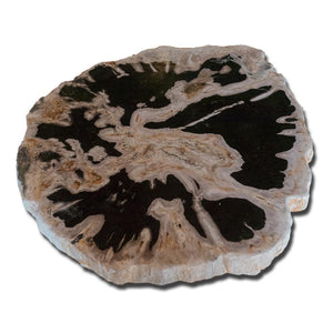 Petrified Wood Slab With Custom Made Base PF-1112 by Aire Furniture